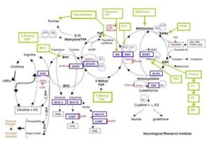 Methylation Cycle Management Michigan Naturopathic Doctor