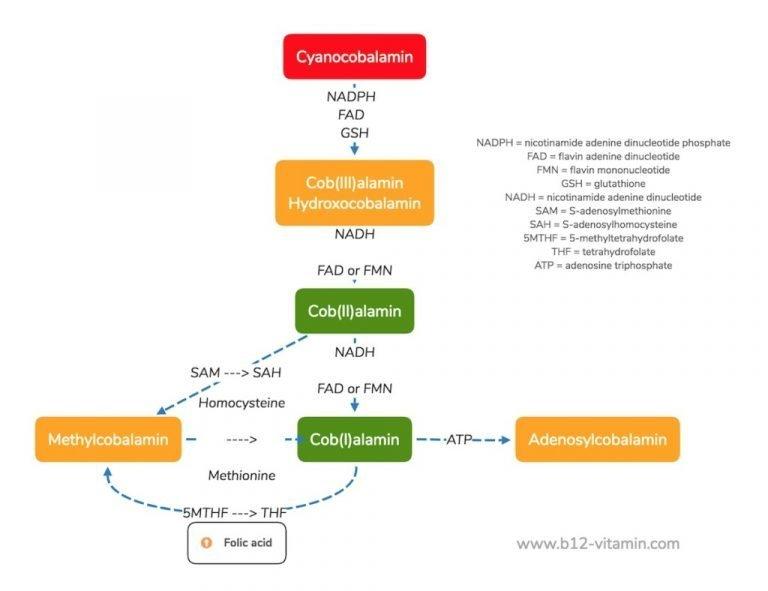 Cyanocobalamin, Methylcobalamin, Hydroxocobalamin, Adenosylcobalamin